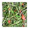 Obrázek Nať mrkve 100 g
