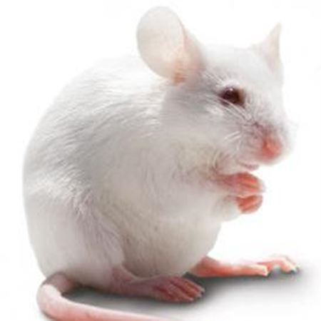 Obrázek pro kategorii myši