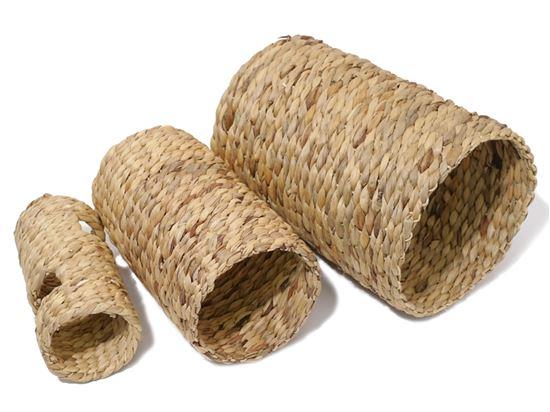Obrázek Tunel hyacint střední