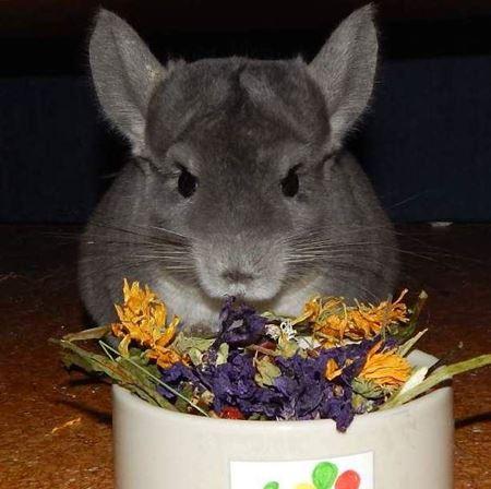 Obrázek pro kategorii zdravé směsi s bylinkami